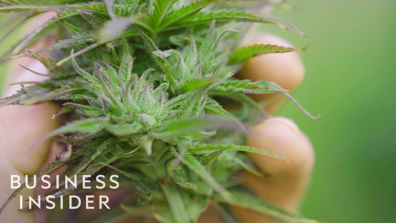 Why CBD Oil Is So Expensive | So Expensive